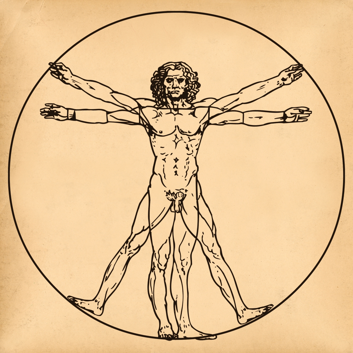 Are athletes more closely related to the vitruvian man theory than non-athletes?